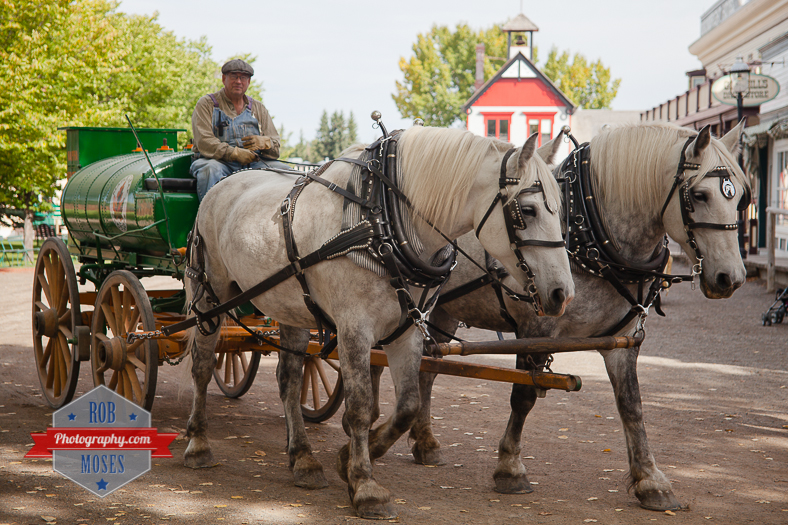 22 Heritage Park Calgary Alberta Canada - Rob Moses Photography - horse buggy