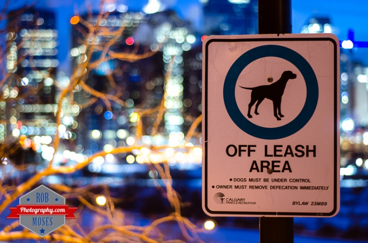 City of Calgary famous Dogs off leash sign bokeh blur - Rob Moses Photography - Vancouver Seattle Photographer