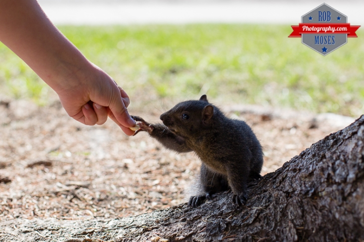 Child boy kid feed feeding wild Friendly Squirrel in Canada bokeh - Rob Moses Photography - Seattle Vancouver Calgary Photographer Native American Photographers
