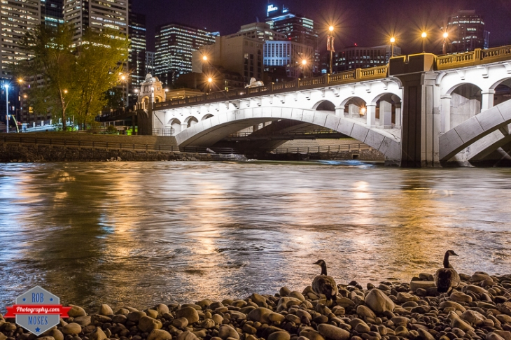 Centre Street Bridge Bow River Geese beach yyc city Rob Moses Photography Calgary Photographer Photographers Native American Famous un celebrity Tlingit Ojibawa Top Popular Best Good Canadian