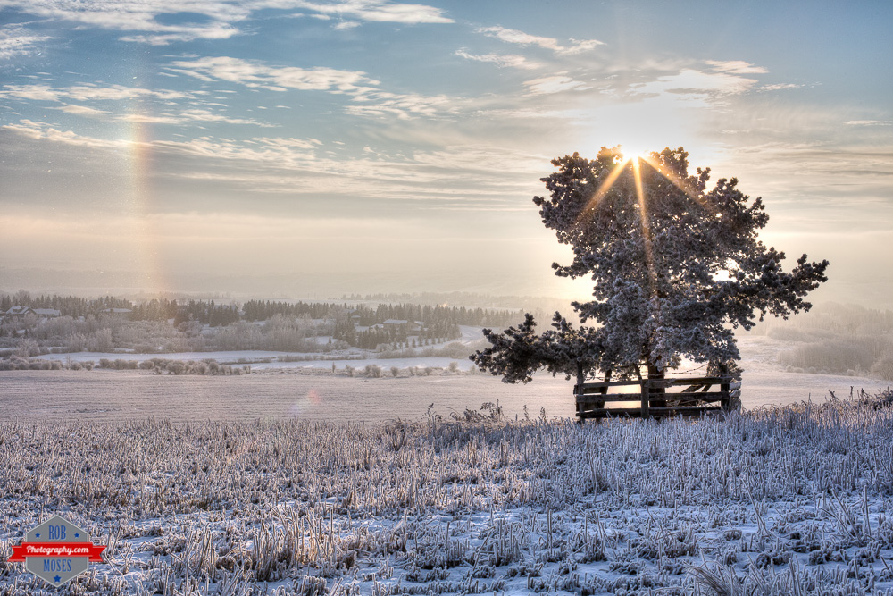 Landscape yyc crazy snow rainbow tree field frost view sky Alberta winter frozen amazing - Rob Moses Photography Calgary Photographer Photographers Native American Famous un celebrity Tlingit Ojibawa Top Popular Best Good Canadian