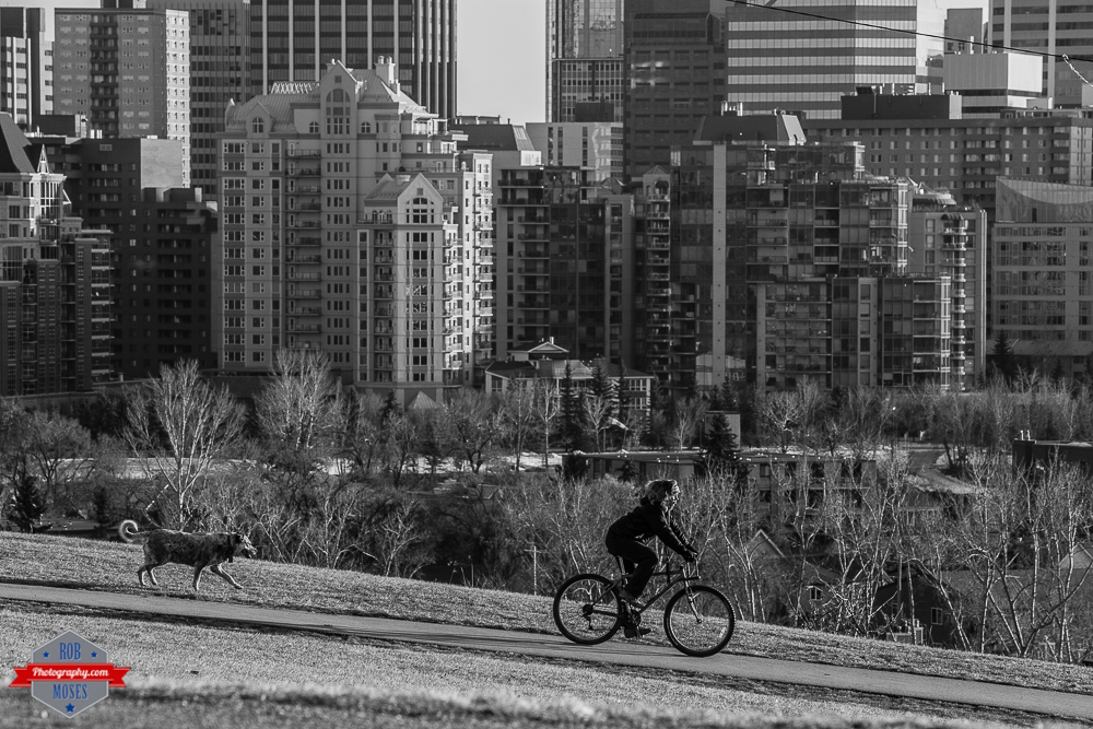 Woman girl biking cycling urban yyc city dog Rob Moses Photography Calgary Photographer Photographers Native American Famous un celebrity Tlingit Ojibawa Top Popular Best Good Canadian winter