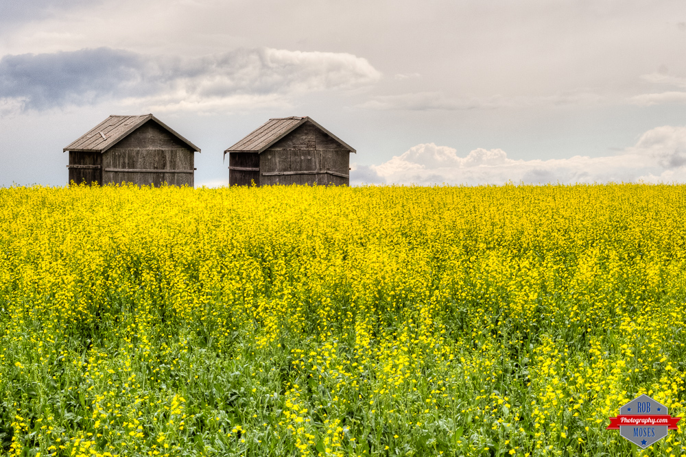 Country landscape feild 2 huts twins sky - Rob Moses Photography Calgary Photographer Photographers Native American Famous un celebrity Tlingit Ojibawa Top Popular Best Good Canadian