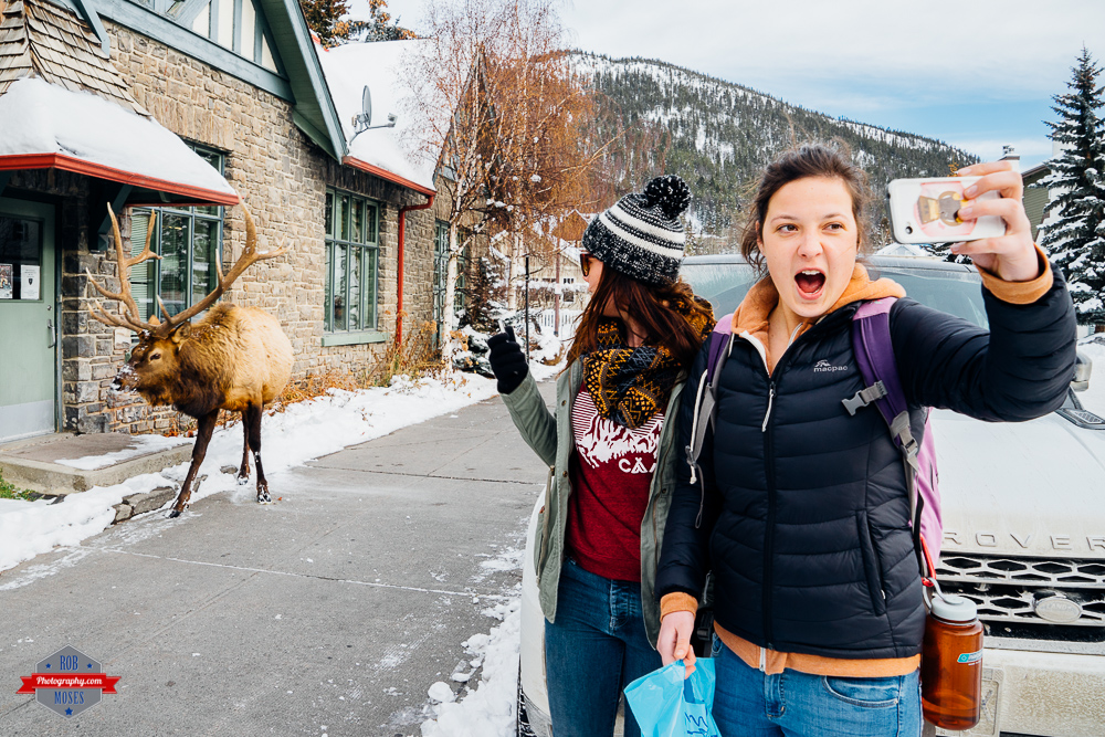 Wild animal elk woman girls selfie funny amazing Canada Rob Moses Photography Calgary Vancouver Seattle Spokane Photographer WA BC Native American Tlingit Ojibaway famous un celebrity Canadian best