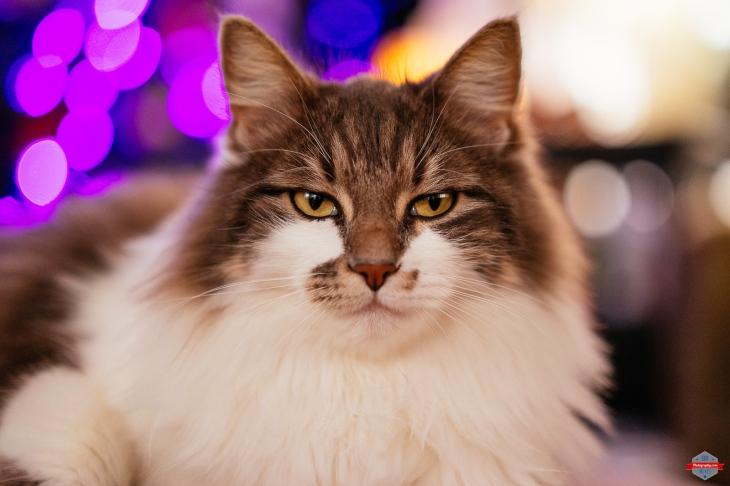 chill-cat-bokeh-sony-ziess-55mm-1-8-bokeh-rob-moses-photography-portland-calgary-vancouver-seattle-spokane-photographer-wa-bc-native-american-tlingit-ojibaway-famous-un-celebrity-canadian-best-pdx-2