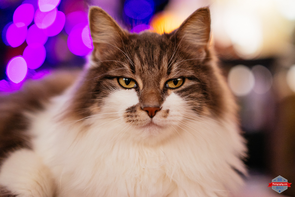 chill-cat-bokeh-sony-ziess-55mm-1-8-bokeh-rob-moses-photography-portland-calgary-vancouver-seattle-spokane-photographer-wa-bc-native-american-tlingit-ojibaway-famous-un-celebrity-canadian-best-pdx