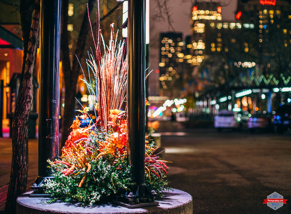 yyc-downtown-olympic-plaza-plant-bokeh-fd-50mm-rob-moses-photography-portland-calgary-vancouver-seattle-spokane-photographer-wa-bc-native-american-tlingit-ojibaway-famous-un-celebrity-canadian-best-pd